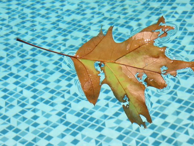 plavající list na hladině v bazénu